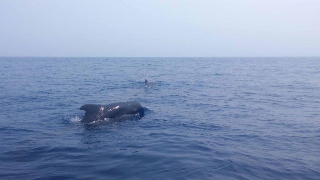 Baleines à Bunaken