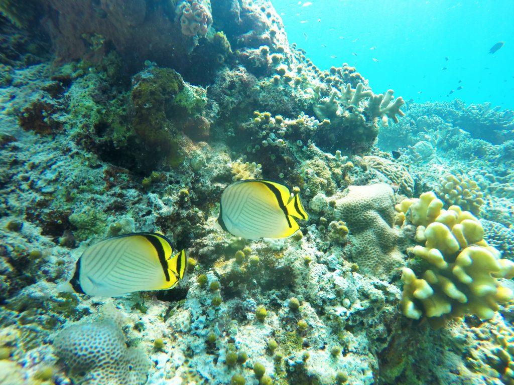 Plongée Bunaken