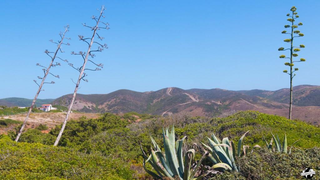 paysage algarve portugal