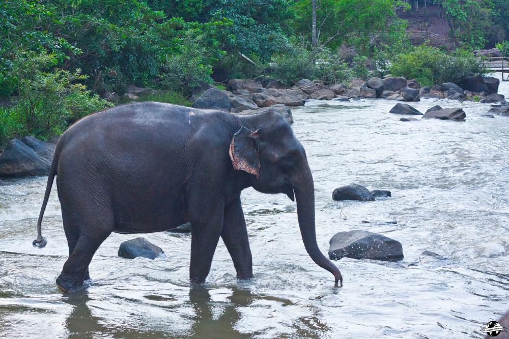 tad lo elephants