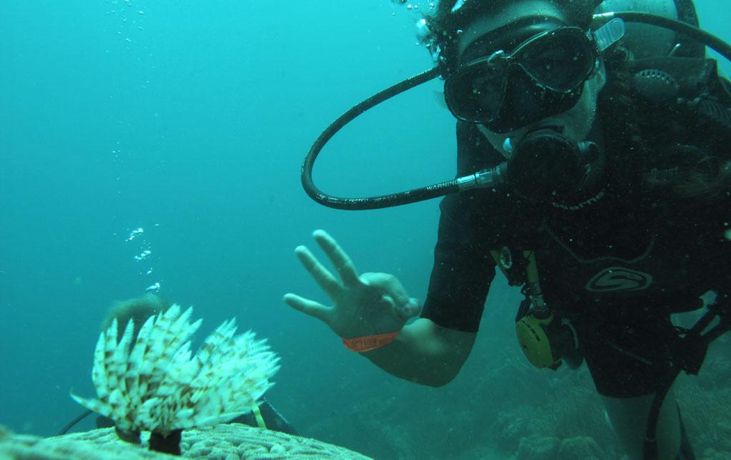 plongée Taganga